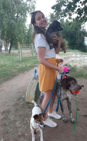 Happy dog walk